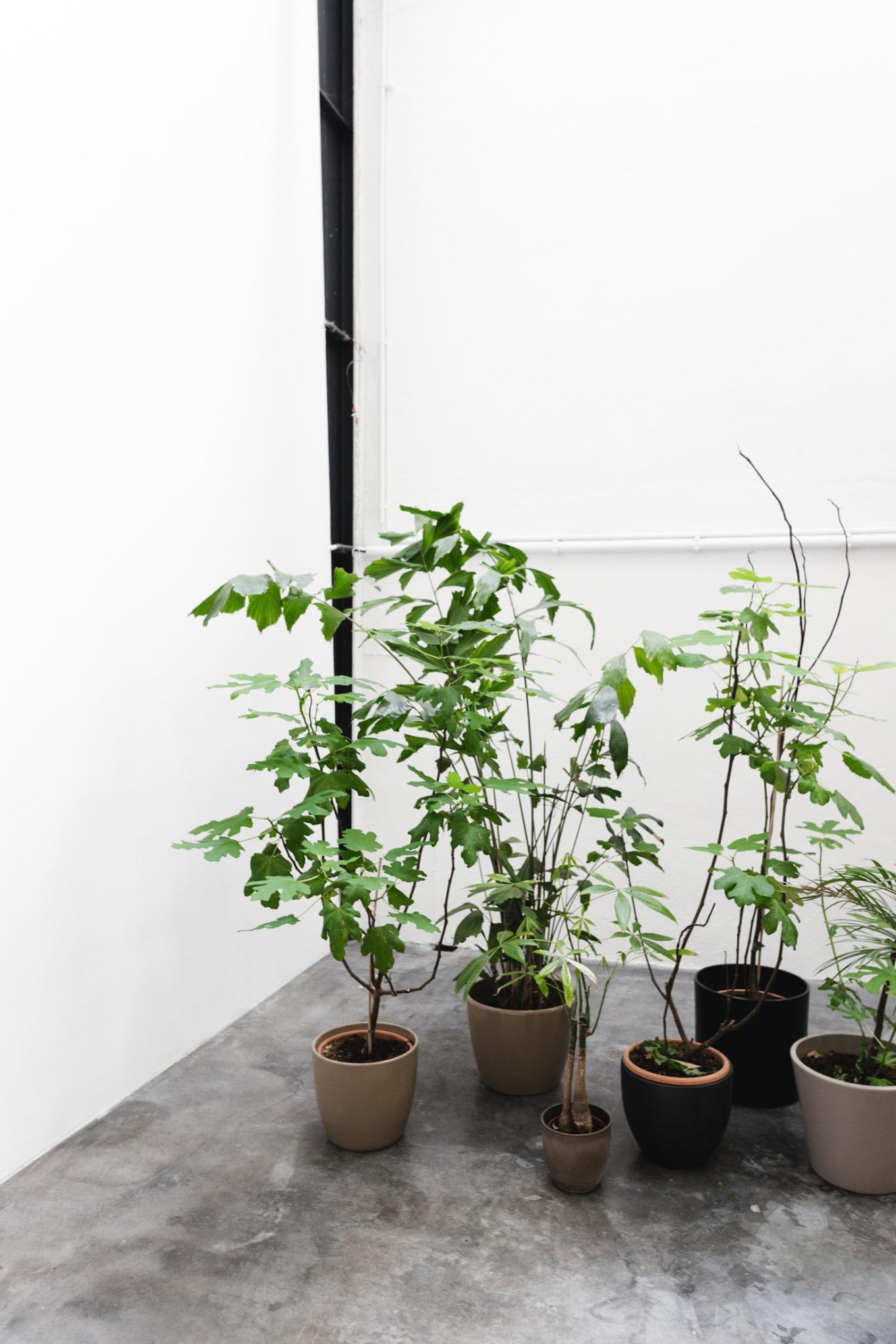 Pflanzen Showroom e15