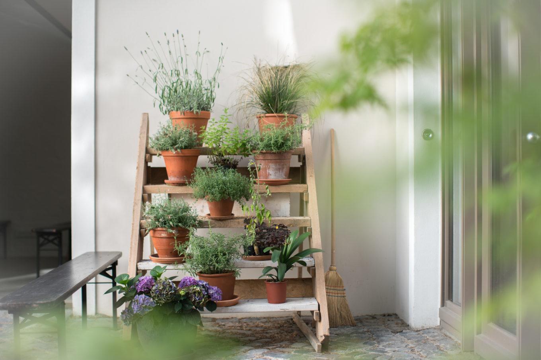 YSSO Pflanzen